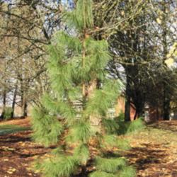 Donovan Burbank Memorial Tree