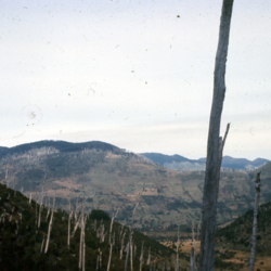Paillaco hills east of Caburgua