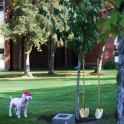 Whitney Bellinghausen Memorial Tree