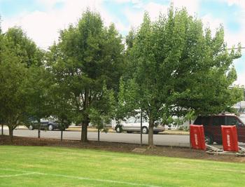 ritz-plaque-tree.jpg