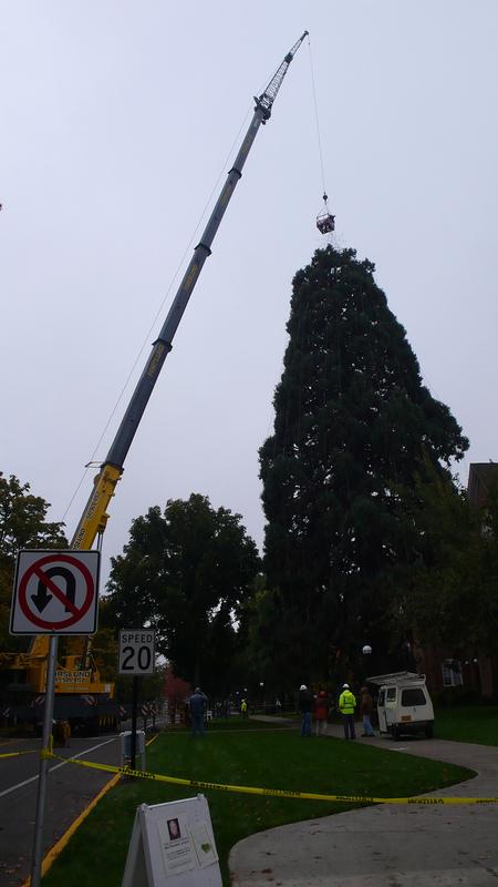 2011 Tree Lighting 5.JPG