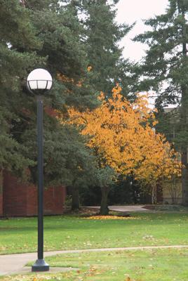 fell-tree-nov.jpg