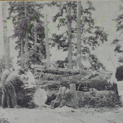 Tree Cleanup from Columbus Day Storm<br />
